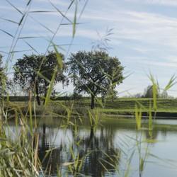 natuur van Tys Damhuis 2011  (95)