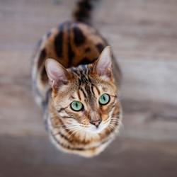 Portretje van mijn kat