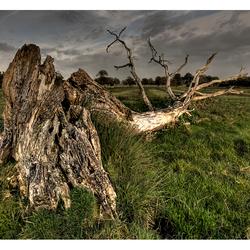 vergaande boom