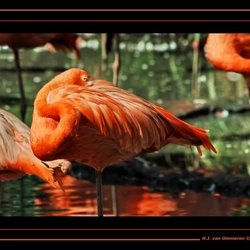 Siesta Flamingo...