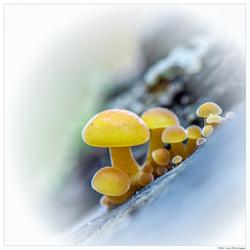 kleine paddenstoeltjes