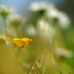 Natuur in de polder