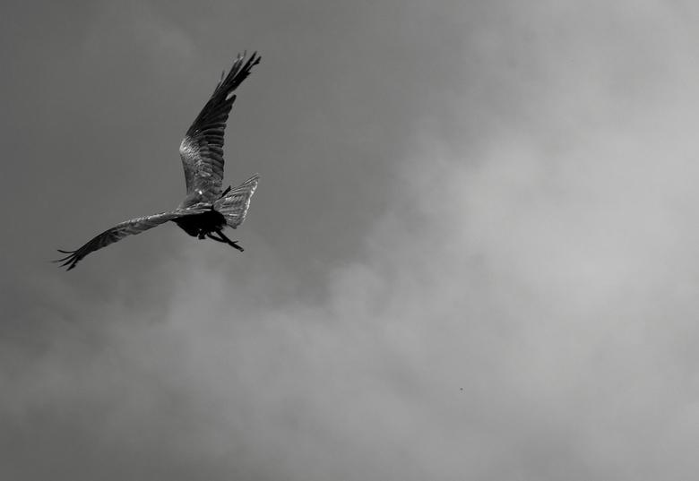 Vogelshow 2