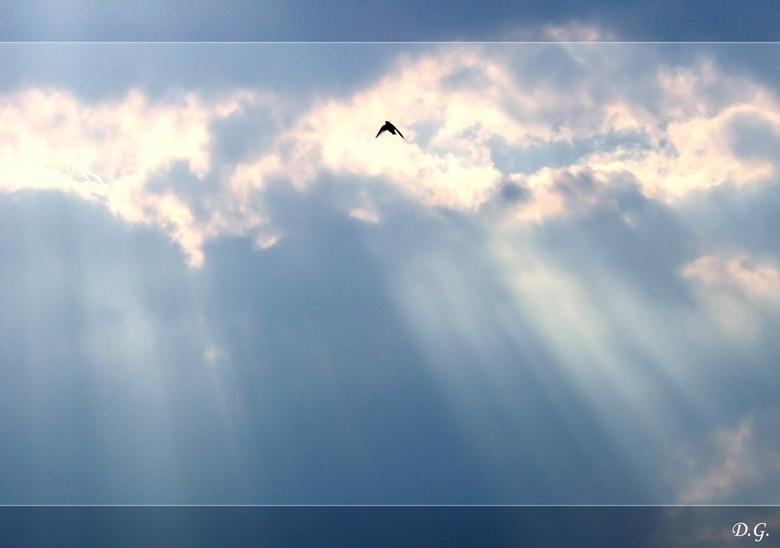 High Above - Het ging mij hier niet direct om de zwaluw (even de grote versie bekijken)<br /> Maar meer om de foto in zijn geheel.