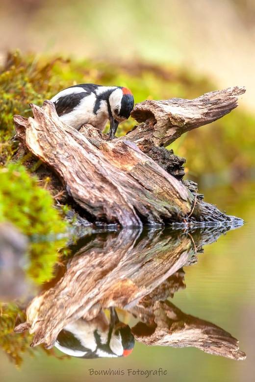 Who's looking @ who? - 'Wie is toch die vreemde vogel in het water?'