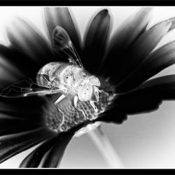 Artistic bee