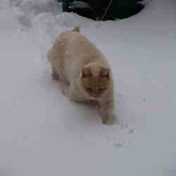 Boris in sneeuw II