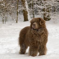Figo in de verse sneeuw