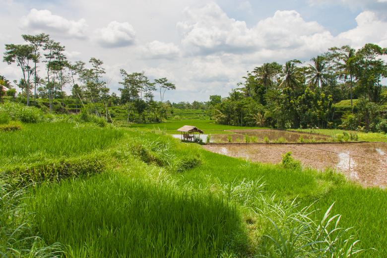 Sawa's Lombok - Gemaakt in de binnenlanden van Lombok