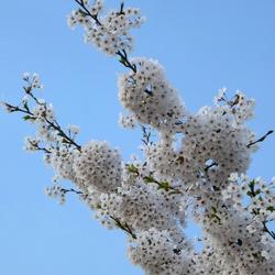 Schoonheid in de lente