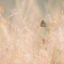 Hangend in het veld