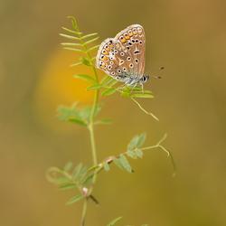 Beautiful Little Butterfly