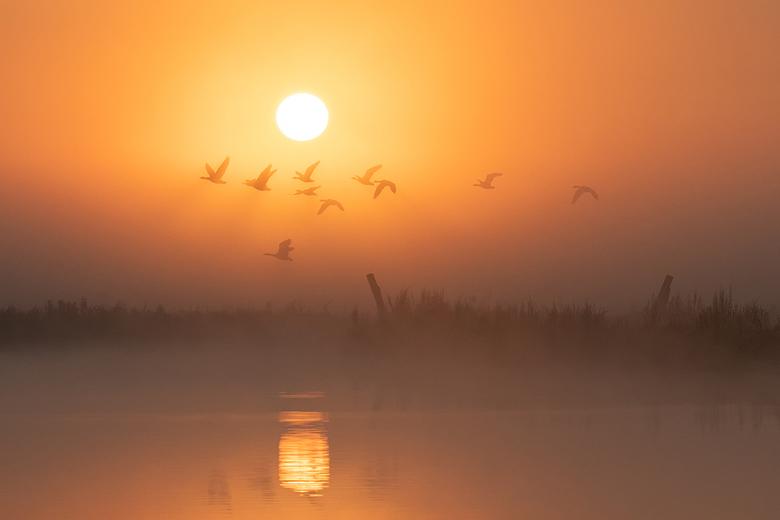 Misty birdscape 2 - Ganzen vertrekken van hun slaapplaats. De mist en tegenlicht zorgen voor een extra sfeertje en geven een mooie schaduw onder de vl