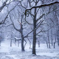 Winter in de stijl van Anton Pieck ***