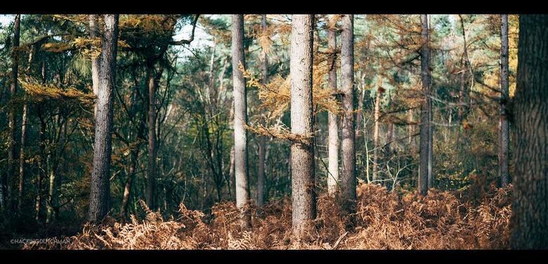 Herfstbos - Herfstkleuren in het bos.<br /> <br /> <br /> <br /> ©MotionMan 2020