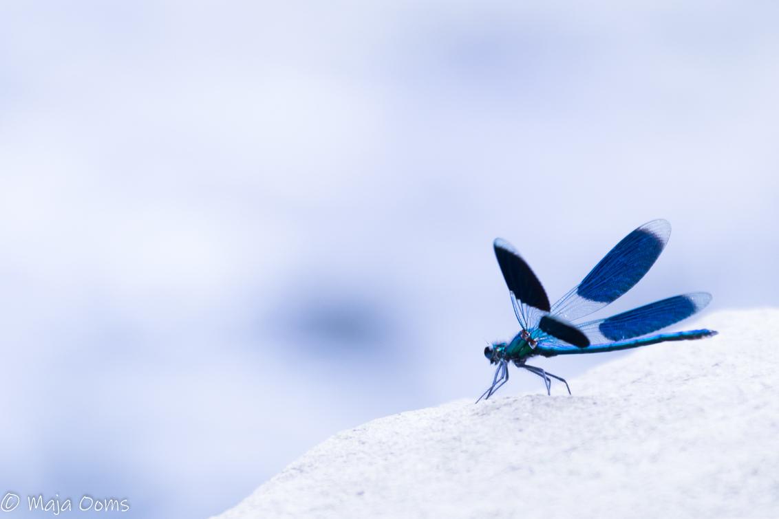 Blue knight...