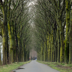 Laan met bomen_bewerkt-1