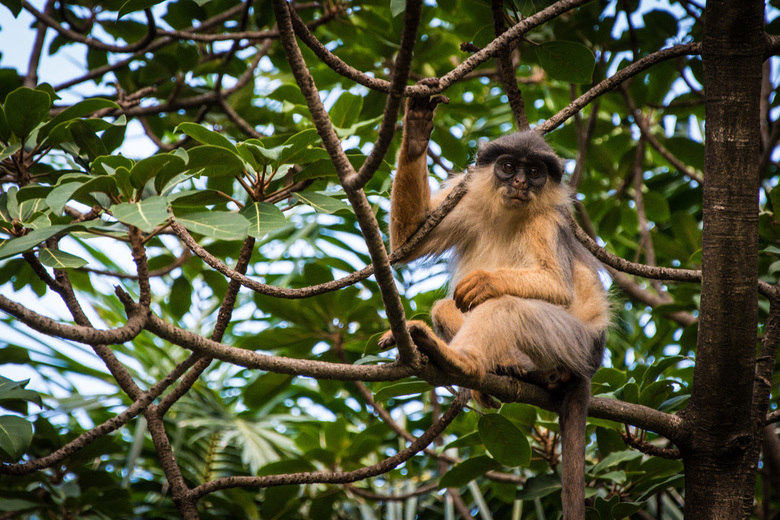 Monkey business 2 -