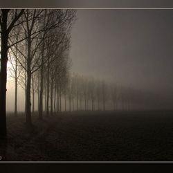 Verloop in de mist