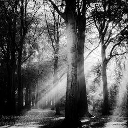 Herfst 2016 in zwartwit