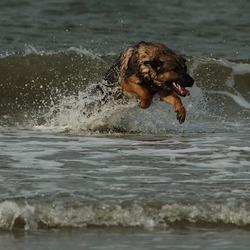 atmaya op het strand