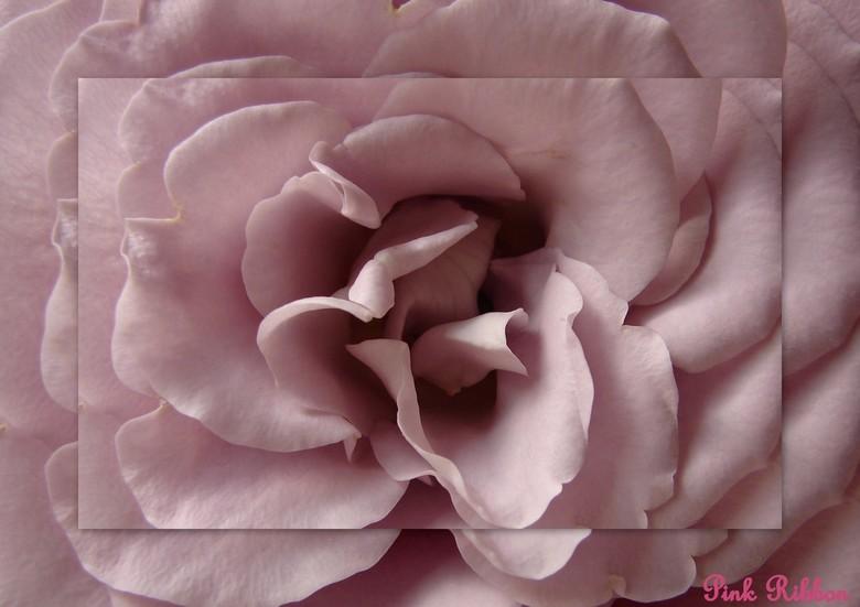 pink ribbon 2 -