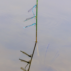 Hang juffers
