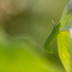groen in groen