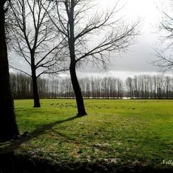 Vijf bomen met schaduw en licht.