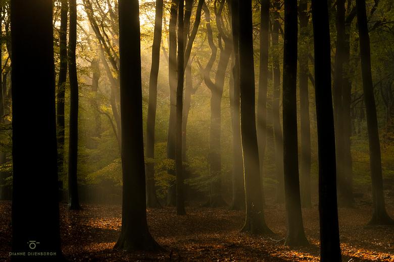Sunbeams.. - Een perfecte ochtend gisteren. Geweldig gezelschap en top omstandigheden. Het had geregend en de zon deed daarna het bos in vlammen staan