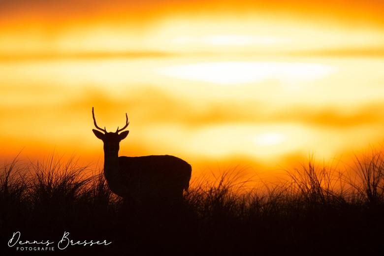 Een hert met zonsondergang  -