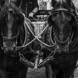 Deventer paarden ZW