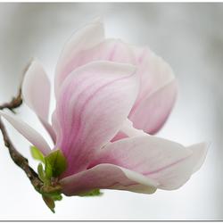 High key van de magnolia