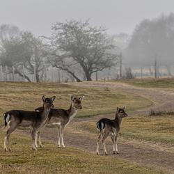 herten in AWD