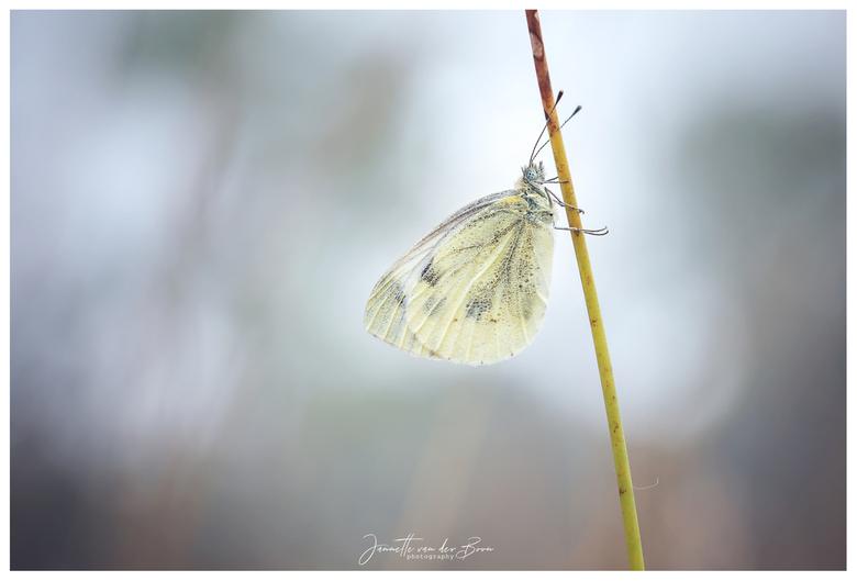 """Ordinary or not... - Veelal ben je maar op zoek naar de """"bijzondere"""" vlindertjes of libellen. En kan je zomaar ineens enorm genieten van een"""