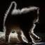 Kitten spookje :)