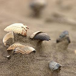 Gebroken schelpen