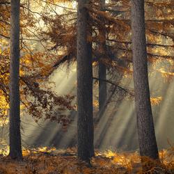 The silent light