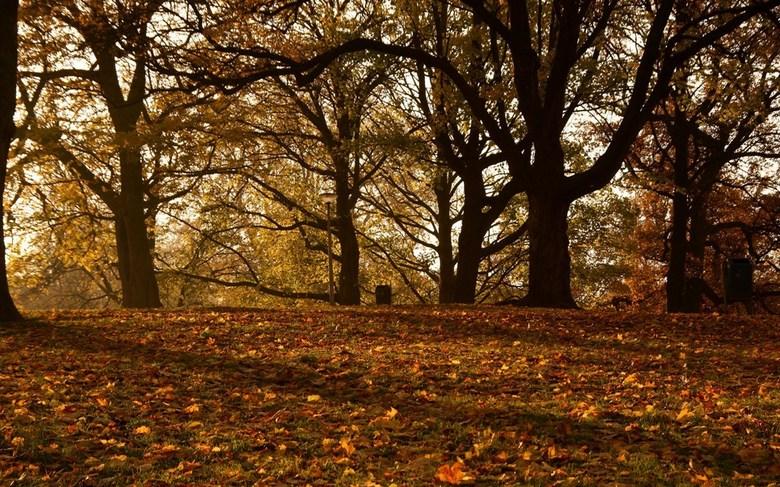 DSC06504 zoom.jpg - Even een berichtje van mij met een herfst foto.<br /> Tijdje niet op Zoom geweest en dat blijft ook nog wel even zo. Ik zie julli