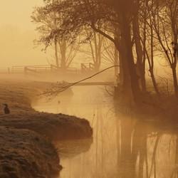 zonop mist natuur (7)