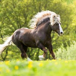 HPE Fotoreis Duitsland - Paarden