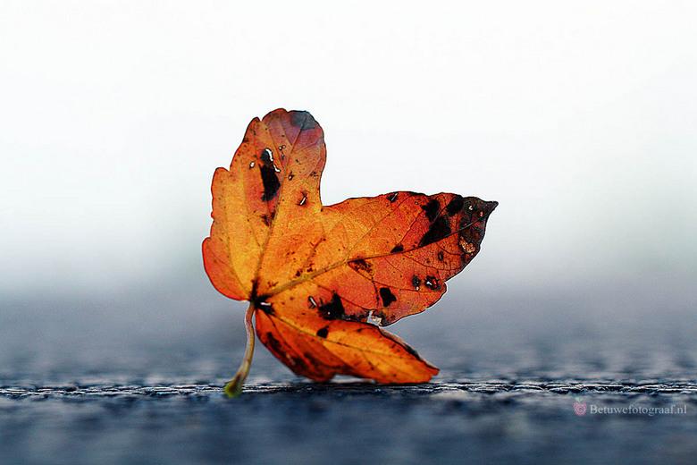 Herfstsfeerblaadje