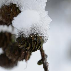 winter propjes