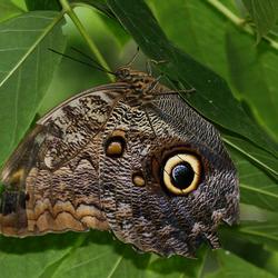 weer een vlinder