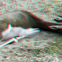 Blijdorp Zoo 3D