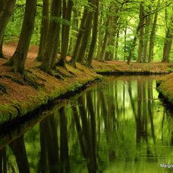 Groen bos en groen water