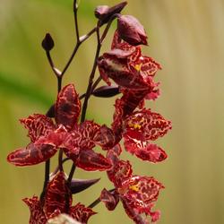 Orchideeënhoeve Luttelgeest