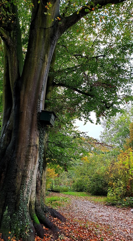 Pastorie tuin - Pastorietuin in   herfst tooi  gr Bets