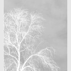 White feeling
