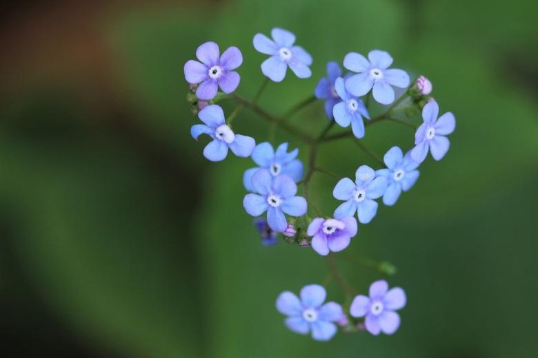 Bloemen hartje